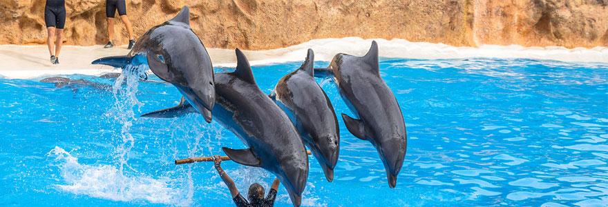Rencontre avec les animaux du parc aquatique Marineland